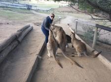 Bonorong Wildlife Sanctuary, Australia - October 2015